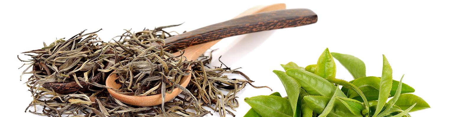 the vert - thé noir -fabricant - importation négoce de thé
